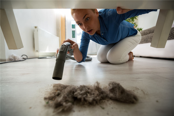 How Dust Can Lead to Household Pests