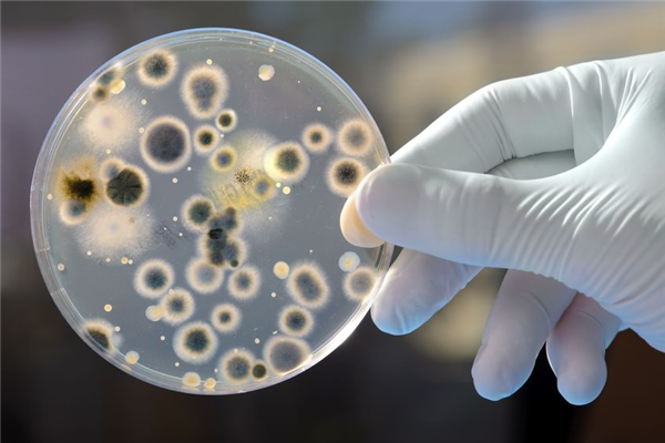 What Bacteria Live in Your Dust?
